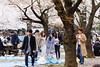 20160405-046-Picnics under Yoyogi-koen cherry blossoms (Roger T Wong) Tags: travel people holiday japan garden balloons tokyo spring picnic crowd harajuku cherryblossoms yoyogikoen 2016 canonef70200mmf4lisusm canon70200f4lis canoneos6d rogertwong