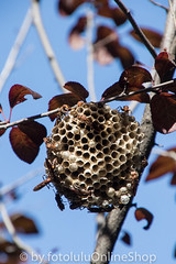 Argentinien_Insekten-96 (fotolulu2012) Tags: tierfoto