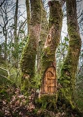 Doon Hill - Fairy House (4652 Paces) Tags: scotland aberfoyle fairyhouse doonhill