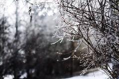 Light and snow. (Fr Kyld) Tags: light mars snow nature beautiful beauty photography snowflakes 50mm march photo nikon foto sweden f14 natur sigma photograph snowing sverige sn fotografi ljus boleh magiclight perfectlight 2013 vackert snar kyld snflingor d5000 nikonphotography vsco vscocam vscogrid vscoeurope magisktljus perfektljus