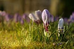 flower (Aleoko) Tags: fotocompetitionbronze