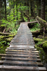 Boardwalk (Mason Aldridge) Tags: summer canada green sunshine forest canon 50mm spring rainforest bc bokeh britishcolumbia f14 shallow 6d fraservalley shallowdof