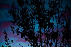 Human Soul #46 (TrojanHorsePictures) Tags: winter nature colors sunrise hike soul