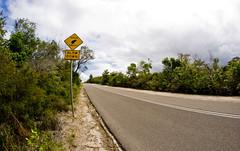 slow down- it's friday [EXPLORED] (wirsindfrei) Tags: road sun nature landscape nikon manly sydney australia nsw newsouthwales slowdown fishey explored nikond60 inexplore bandicoots wallimex