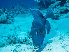 IMG_0741 (eye[4]eye) Tags: egypt diving gypten tauchen bluewaves