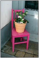 Blumentopf auf rosa Sessel (hromadkah) Tags: exakta c200 fujicolor exaktavarexiib