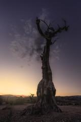 Sunset in Tabernas (Jose HL) Tags: sunset landscape atardecer desert paisaje andalucia desierto seco almeria tierra olivo sequia tabernas desiertodetabernas josehernandez