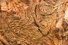 Art in natural decay_2 (Graham Dash) Tags: trees textures abstracts treetrunks rottenwood naturalabstracts