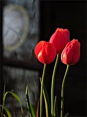 Time For Sun Happiness And Colors (Konny D.) Tags: clock tulips time tulipas orologio tempo zeit tulpen uhr tiempo tulipes tulipanes tulipani tulppaanit