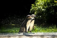 _DSC6029 (alessandro.spagnolli) Tags: zoo natura tamronlens naturalistica lecornelle parcofaunistico sonyalpha77