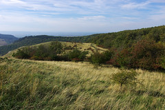 Rolling meadows of Plava (Gregor  Samsa) Tags: czech meadow czechrepublic bohemia rolling rollinghills ceskarepublika czechia palava cesko plava esko eskrepublika czechland rollinglandscape pavlovskvrchy czechlands