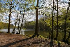 Burbacher Waldweiher (Das Saarland) Tags: saarland saarbrcken weiher