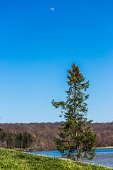 Old Pine (david_sharo) Tags: moon lake tree canon moraine t5i davidsharo