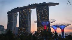 Marina Bay Singapore (aaCriiss) Tags: sky building travelling beautiful architecture skyscraper marina lights bay singapore fujifilm summertime singapur marinabay fujifilmxe1