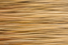 Abstract of reeds in marshland using motion blur - Leslie Street Spit, Toronto (Phil Marion) Tags: travel wedding boy vacation people woman hot sexy ass beach girl beautiful beauty sex canon naked nude nipples slim boobs nu candid dick young hijab nackt explore teen tranny xxx chubby plump  burqa nudo desnudo dink  nubile telanjang schlampe    5photosaday explored  thn nijab    kha    malibog    philmarion         saloupe