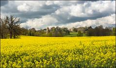 Castle Ashby Springtime (Darwinsgift) Tags: castle church field ed spring nikon northamptonshire seed rape oil nikkor f28 springtime 80200 ashby d810