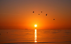 Pidgeon flyby, in a orange Cleethorpes sky (Peanut1371) Tags: sea sky orange sun water birds sunrise pidgeon