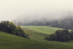 fog (spikeROCK) Tags: nature canon exploring slovensko orava slovakia priroda slovak juro 70d kupculak