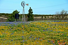 Wildflowers and Windmill HWW (The Old Texan) Tags: windmill texas wildflowers roadside bluebonnets stateflower