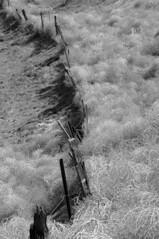 Blockade (nedlugr) Tags: california ca blackandwhite bw usa rural fence shadows blockade tumbleweeds kerncounty russianthistle ruralwest omot thebittercreeknationalwildliferefuge