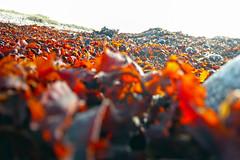 At the beach ... ☺! (1190215) (Le Photiste) Tags: abstract nature colors wow germany vacances artwork holidays europe colours ngc digitalart creative photographers explore clay atthebeach vacations ferien soe fehmarn fairplay giveme5 autofocus photomix ineffable digitalartwork prophoto friendsforever finegold artandsoul bloodsweatandgears greatphotographers lovelyshot explored creativeart digitalcreations artyimpression inexplore beautifulcapture damncoolphotographers myfriendspictures artisticimpressions simplysuperb digifotopro afeastformyeyes artforfun iqimagequality yourbestoftoday artofimages saariysqualitypictures hairygitselite worldofdetails planetearthnature lovelyflickr universalart blinkagain digitalartfx2 theredgroup kreativepeople aphotographersview thepitstopshop rememberthatmomentlevel1 thelooklevel1red showcaseimages mastersofcreativephotography creativeimpuls vigilantphotographersunitelevel1 cazadoresdeimágenes livingwithmultiplesclerosisms infinitexposure django'smaster bestpeople'schoice planetearthart isleoffehmarngermany