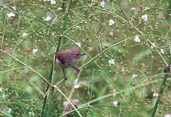 """Flower Girl"" (OM-Digital) Tags: birding melbourne olympus bushwalking sb omd birdwatcher mft 40150mm localpark parksvictoria"