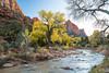 Sony A7RII Zion National Park The Watchman Autumn Dr. Elliot McGucken Fine Art Landscape Photography (45SURF Hero's Odyssey Mythology Landscapes & Godde) Tags: nature fineart wideangle a7 fineartphotography naturephotography wideanglelens naturephotos fineartphotos a7r a72 fineartphotographer fineartnature sonya7 elliotmcgucken sonya7r elliotmcguckenphotography elliotmcguckenfineart sonya7rii a7rii a7r2 sonya7r2 masterfineartphotography sonya7riizionnationalparkthewatchmanautumndrelliotmcguckenfineartlandscapephotography