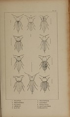 n188_w1150 (BioDivLibrary) Tags: greatbritain insect bugs beetles arthropoda californiaacademyofsciences coleoptera taxonomy:order=coleoptera colorourcollections bhl:page=39306984 dc:identifier=httpbiodiversitylibraryorgpage39306984 bhlarthropod