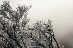 Freezing rain (Masayuki Nozaki) Tags: snow tree ice rain sony freezing sigma snowscape ilce7rm2 7r2