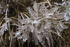 _MG_1103 (schamrock77) Tags: winter italy mountain ice freezing natura inverno montagna friuli ghiaccio galaverna canon6d 35f2is