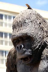 Lezard sur Gorille