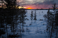 Looking out (Storm'sEndPhoto) Tags: winter sunset wild snow ice suomi finland landscape outdoors ngc arctic adventure swamp lapland wilderness mushing lumi talvi lappi mire dogmushing thewild outdoorlife intothewild tnc ylläs kaamos arcticlife wildernessculture thenatureconservancey