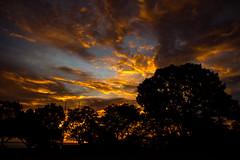 Darwin at Sunset (betadecay2000) Tags: ocean park sunset red sea orange sun rot weather port see evening abend twilight meer wasser sonnenuntergang outdoor dusk feld himmel wolke wolken australia darwin dämmerung australien northern sonne rood sonnenuntergänge bicentennial wetter territory australie idylle untergang weer abendrot austral ozean nordaustralien nordterritorium