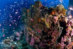 El Pipo (ShaunMYeo) Tags: scubadiving gibraltar wrecks calpe underwaterphotography  gibilterra ikelite artificialreef      gibraltr  cebelitark gjibraltar ibraltaro hibraltar xibraltar giobrltar gibraltrs gibraltaras ibilt            elpipowreck