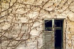 _DSC0676 (adrizufe) Tags: windows nikon ngc ventanas basquecountry gipuzkoa eibar abandonado enredadera descolorido nikonstunninggallery aplusphoto ajado descascarillado d7000 adrizufe adrianzubia