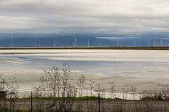 29/2016 - The Redwood City Weather Forecast (Jill Clardy) Tags: city bridge storm water rain clouds bay harbor san francisco power cloudy gray explore rainy rainstorm redwood pylons explored day29366 29jan16 366the2016edition 3662016 4b4a9329