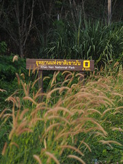 Khao Nan National Park Waterfall Thailand Sdthailand - (C) (hn.) Tags: signs schilder grass sign thailand waterfall nationalpark wasserfall south schild thai grasses gras language script schrift sprache nakhonsithammarat grser sden thaiscript provinz southernthailand thailanguage thaiwriting souththailand thailndisch thaischrift khaonan sdthailand sunanta nakhonsithammaratprovince chanwatnakhonsithammarat noppitham chanwatnakhonsrithammarat sdregion namtoksunanta sunantawaterfall nakhonsrithammaratprovince provinznakhonsithammarat provinznakhonsrithammarat chanwat namtokkhaonan khaonannationalpark khaonanwaterfall