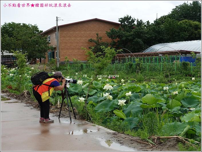 京畿道 兩水頭 洗美苑 (59).JPG