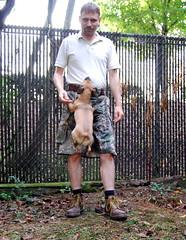 511 Tactical Kilt, RealTree Camo (NCReedplayer) Tags: dog chihuahua kilt pug canine camo chug k9 511tactical camokilt