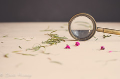 Close Examination (paisleyrainboots) Tags: flowers stilllife surface magnifyingglass