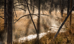 Tangled Creek, Yellowstone (MarkWarnes) Tags: morning trees mist water fog creek sunrise dawn stream silhouete steam yellowstonenationalpark yellowstone wyoming ynp morningmist fireholelakedrive lowergeyserbasin tanglecreek tangledcreek wyomingyellowstonenationalpark
