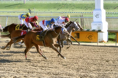 2016-01-03 (42) r3 Lauralea Glaser on #6 Humorous Chant (JLeeFleenor) Tags: photos photography md marylandhorseracing marylandracing laurelpark jockey   jinete  dokej jocheu  jquei okej kilparatsastaja rennreiter fantino    jokey ngi horses thoroughbreds equine equestrian cheval cavalo cavallo cavall caballo pferd paard perd hevonen hest hestur cal kon konj beygir capall ceffyl cuddy yarraman faras alogo soos kuda uma pfeerd koin    hst     ko  winner maryland