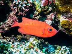IMG_0512 (eye[4]eye) Tags: egypt diving gypten tauchen bluewaves