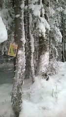 Bookcrossing release (zimort) Tags: winter snow norway book norge vinter woods bookcrossing forrest norwegen skog bok sn gjvik wildrelease