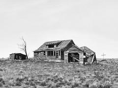 Past The Point Of No Return (John Westrock) Tags: blackandwhite tree abandoned farmhouse rural cross pacificnorthwest washingtonstate olympusomdem5 olympusmzuikodigitaled1240mmf28