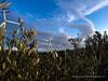 Olive Windmill (Sailor Alex) Tags: france landscape windmills giants windpower windgeneration languedocroussilon