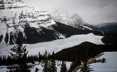 Frozen Peyto Lake (Witty nickname) Tags: trees mountain snow mountains cold tree ice nature landscape frozen roadtrip glacier alberta banffnationalpark peytolake peyto icefieldsparkway nikond800