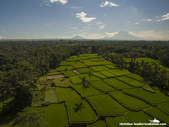 Tegalalang rice terraces with Mount Agung in the background - Bali-2016-13 (Christian Loader) Tags: bali field indonesia rice terrace aerial system unesco worldheritagesite agriculture irrigation ubud paddyfield riceterrace drone phantom3 tegalalang aerialimage subak tegallalang scubazoo christianloader tegalalangriceterrace scubazooimages djiphantom3professional