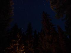 BC Starlight