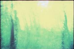 (bensn) Tags: trees light blur tree green film dark pentax slide velvia 100 f18 limited fa lx 31mm